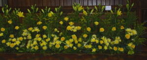 A floral display in honour of St David.